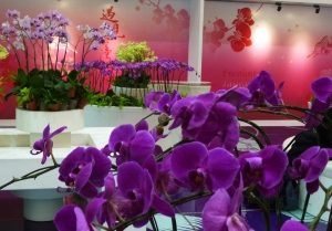 orchid gallery 1