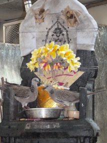 doves at altar